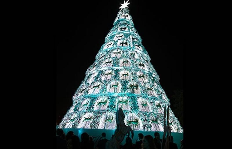 El árbol mide aproximadamente 24 metros de largo.