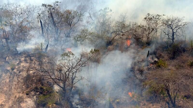 incendio forestal mexico