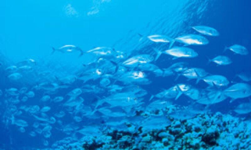 EU dijo que su decisión de apelar el fallo demuestra su compromiso con la seguridad de los delfines. (Foto: Thinkstock)