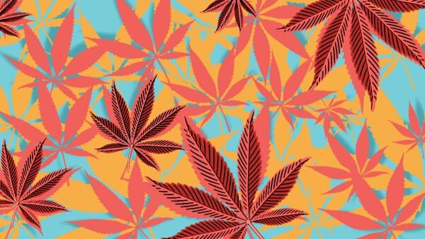 Decomiso de drogas en el gobierno de AMLO
