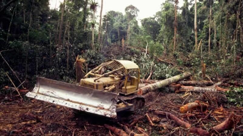 deforestacion cambio climatico