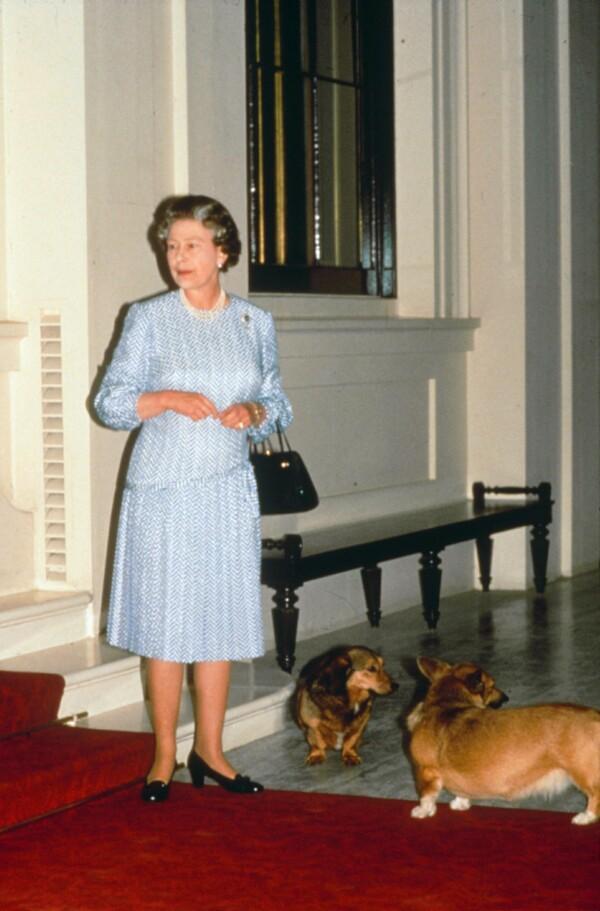 Corgis de la reina Isabel