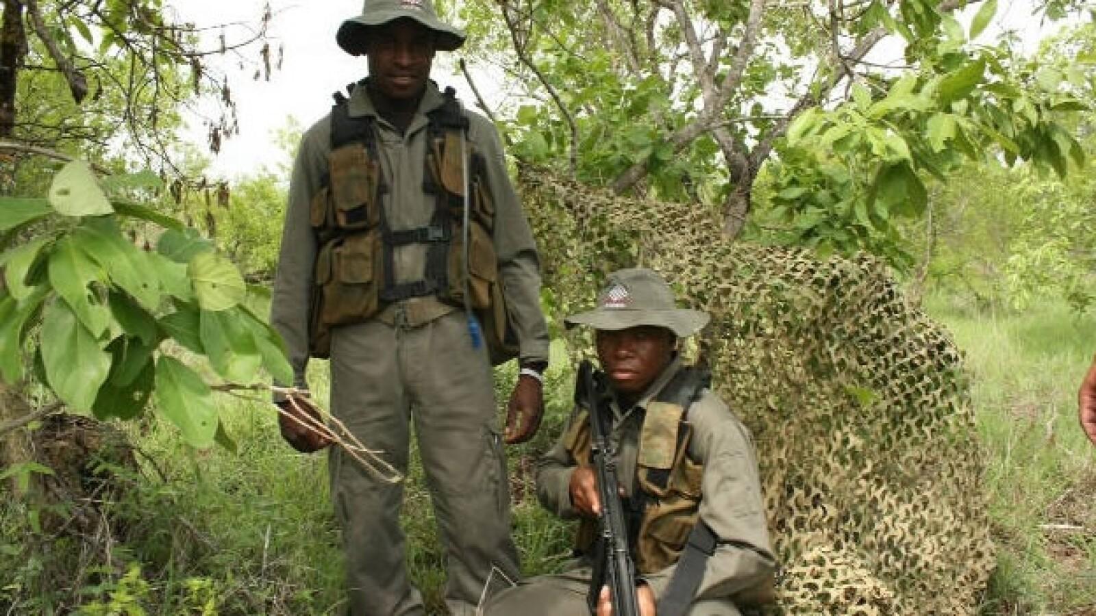rinocerontes caza ilegal especies 04