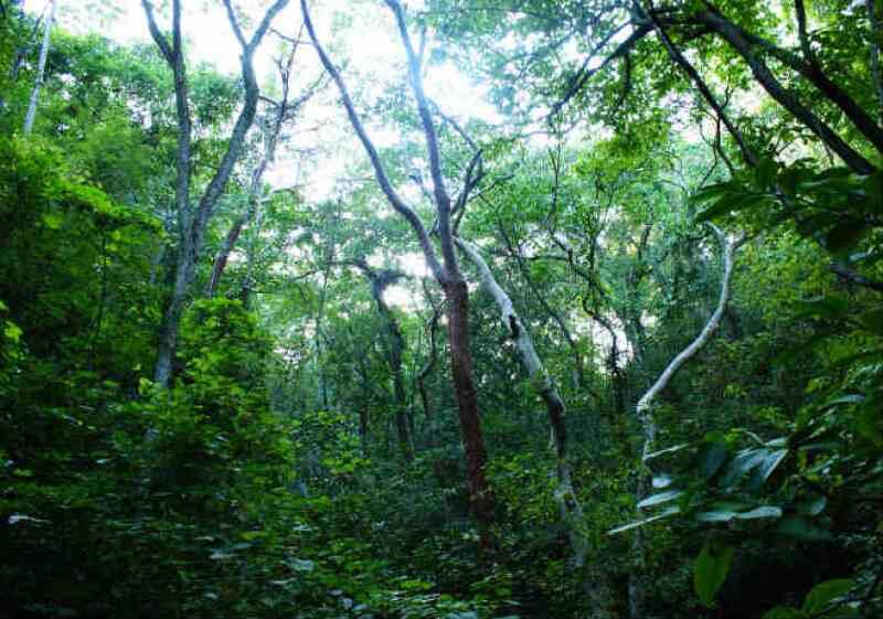 Ecosistema Jalisco