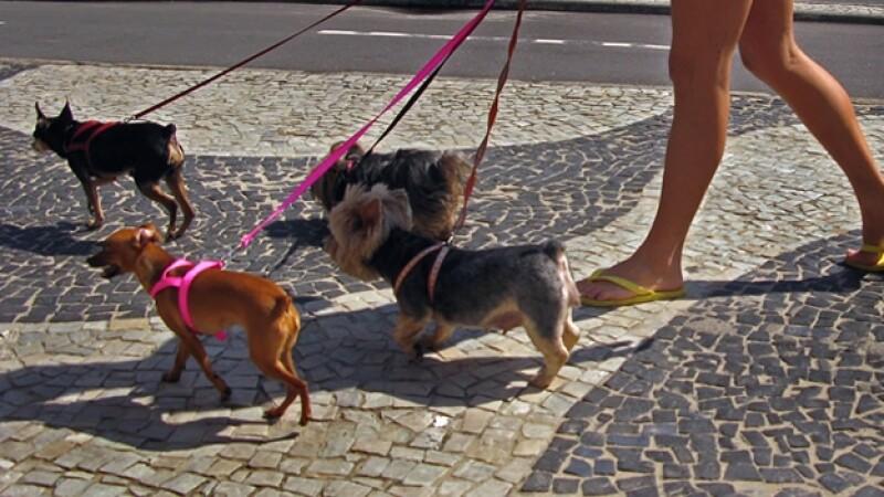 perros_brasil