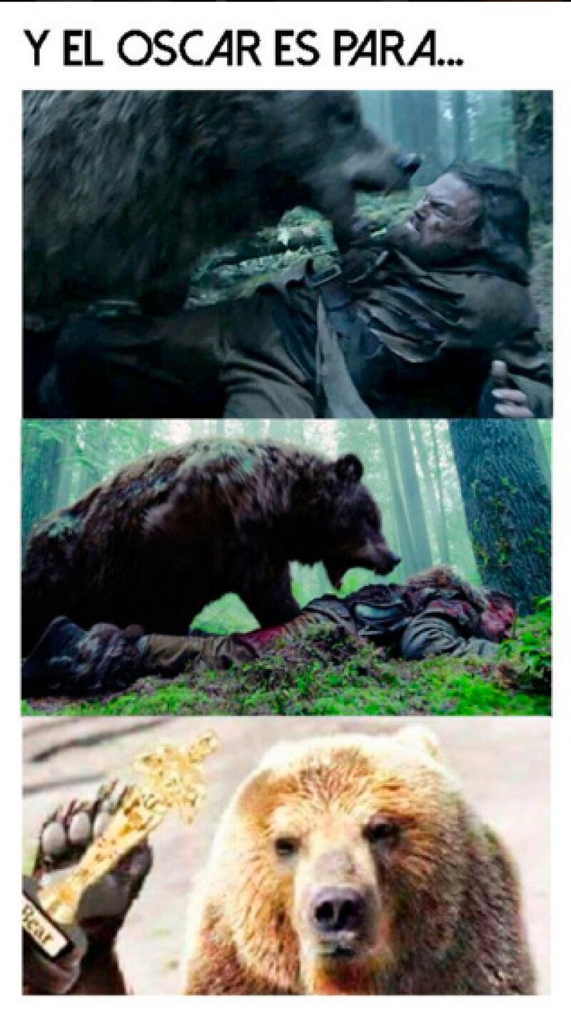 El oso según las redes sociales, se merece ganar un Oscar.
