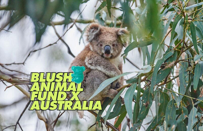 koala-lush-jabon-australia-animal-fund