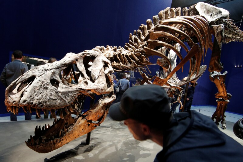 "Visitors look at a 67 million year-old skeleton of a Tyrannosaurus Rex dinosaur, named Trix, during the first day of the exhibition ""A T-Rex in Paris"" at the  French National Museum of Natural History in Paris"