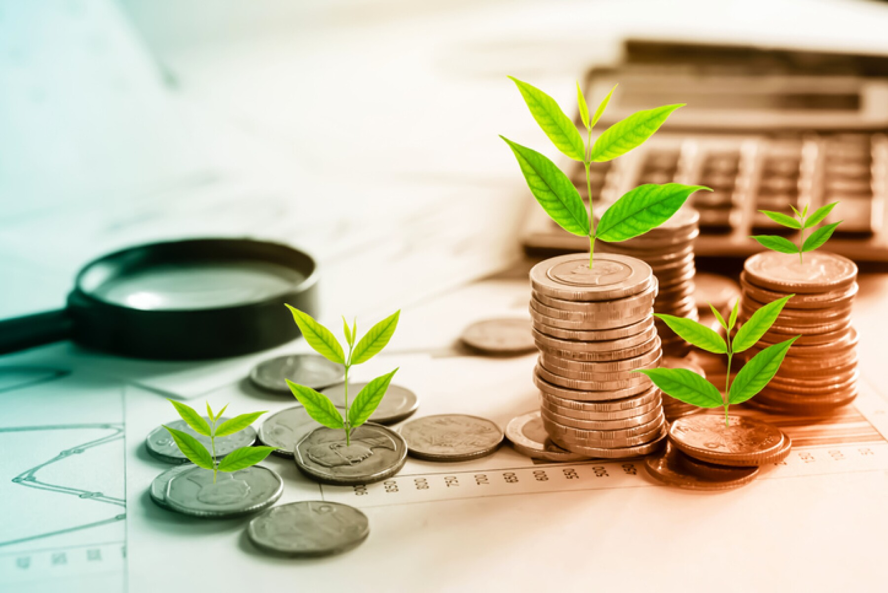 tree growing on coins idea for growing business concept