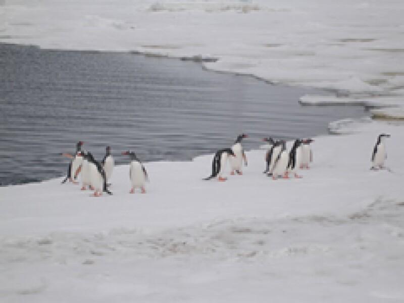 La Antártida se está calentando en lugar de enfriarse, como se creía. (Foto: Archivo)