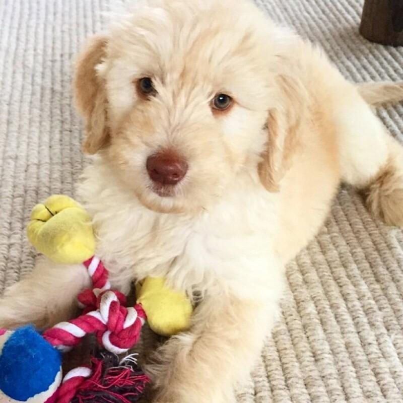 Este hermoso perrito conquistó el corazón de la familia Hemsworth-Pataky.