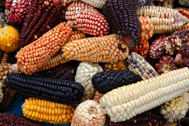 Variedad de maíz.