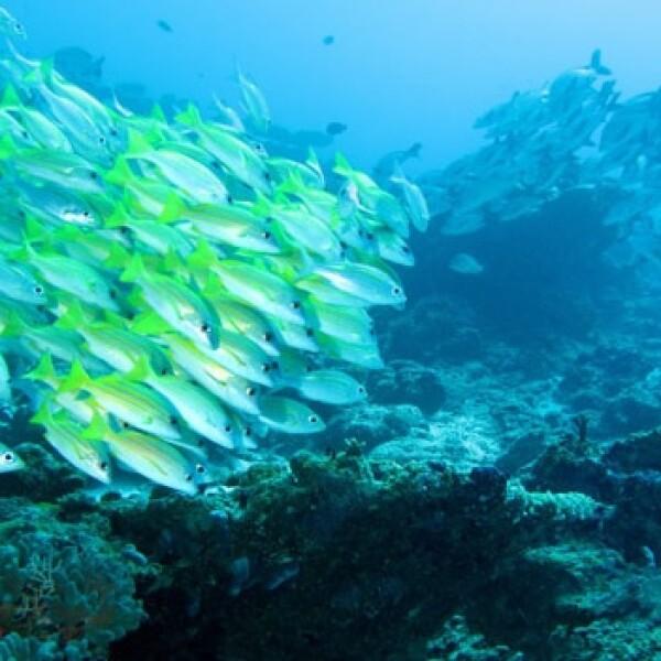 arrecife coral peces 03