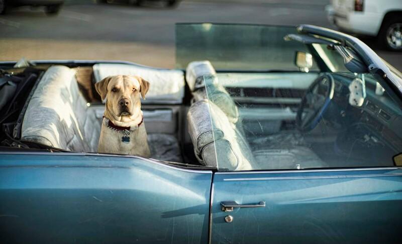 perro auto viaje.jpg