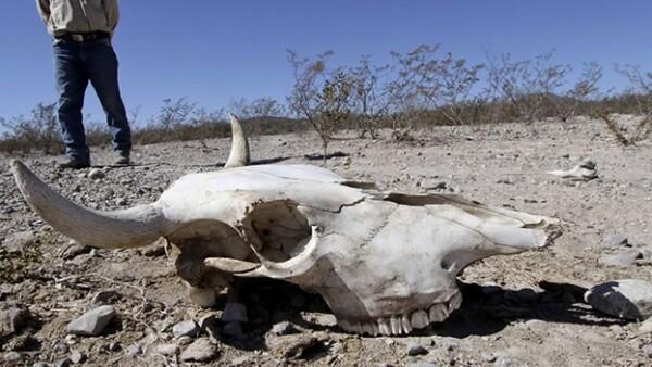 sequia Coahuila agricultura ganadería