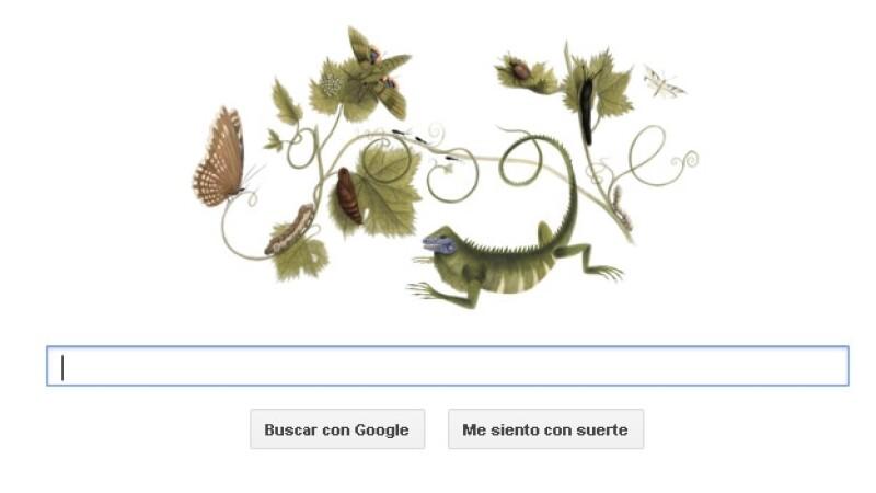 maria merian, etmologia, doodle, google