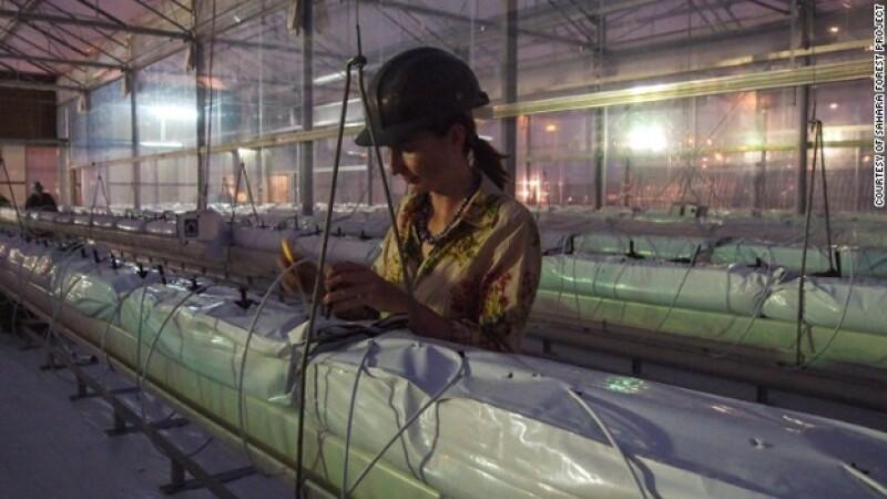 cultivos desierto energia solar