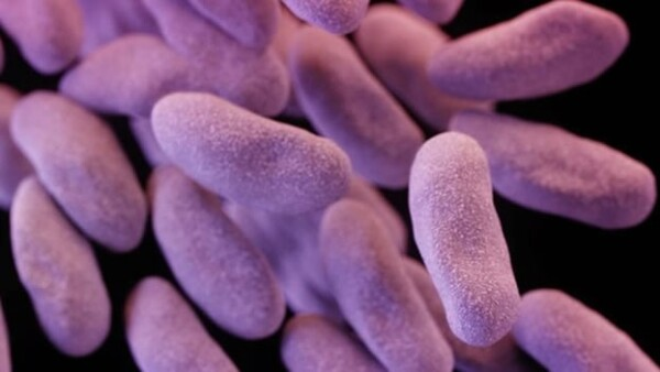 bacterias resistentes a antibioticos