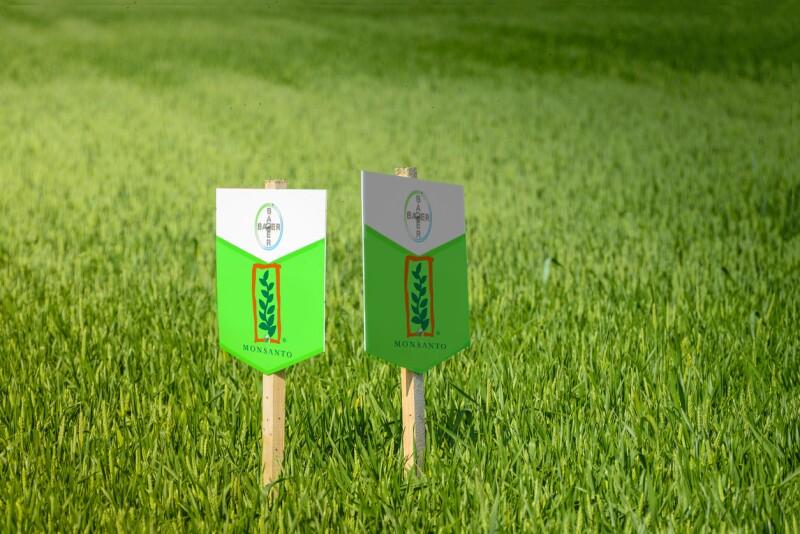 De la heroína al glifosato: 3 cosas que debes saber de Bayer y Monsanto