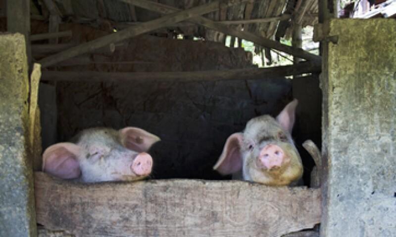 La planta producirá durante décadas cientos de miles de toneladas de alimentos para animales. (Foto: Getty Images)