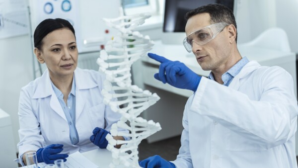 Professioanl researchers analysing a dna model