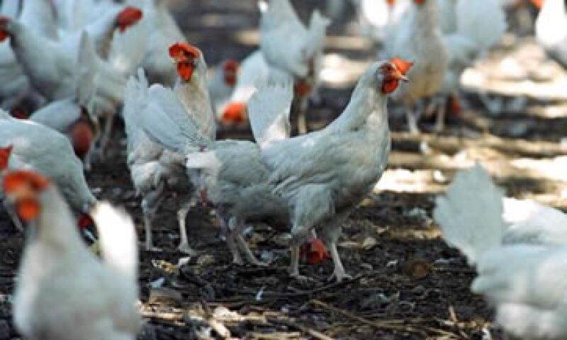 El 31 de julio, México confirmó dumping en las exportaciones de pollo de EU.  (Foto: AP)