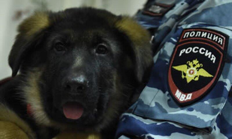 La entrega de este cachorro a la policía francesa es considerada por los rusos como un símbolo de unidad contra el terrorismo. (Foto: AFP)