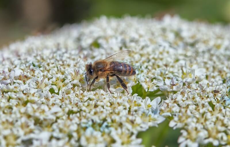 Salvar abejas