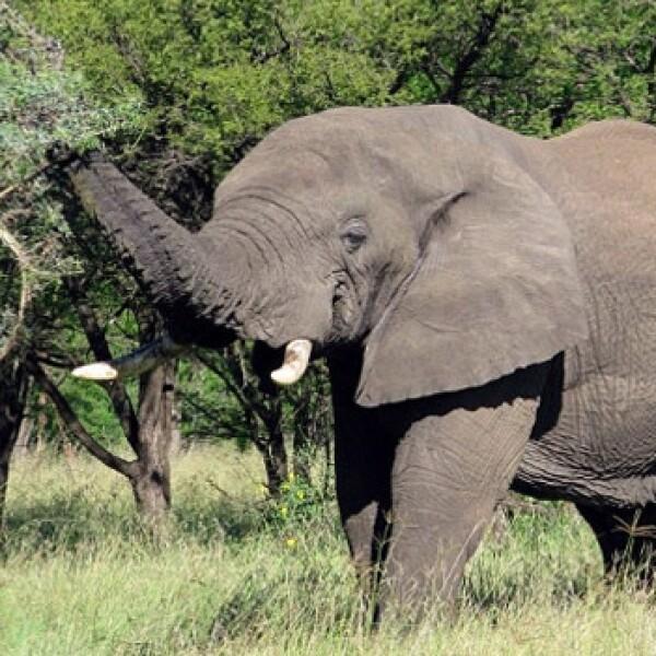 Tanzania: Take a ride on the wild side elefante