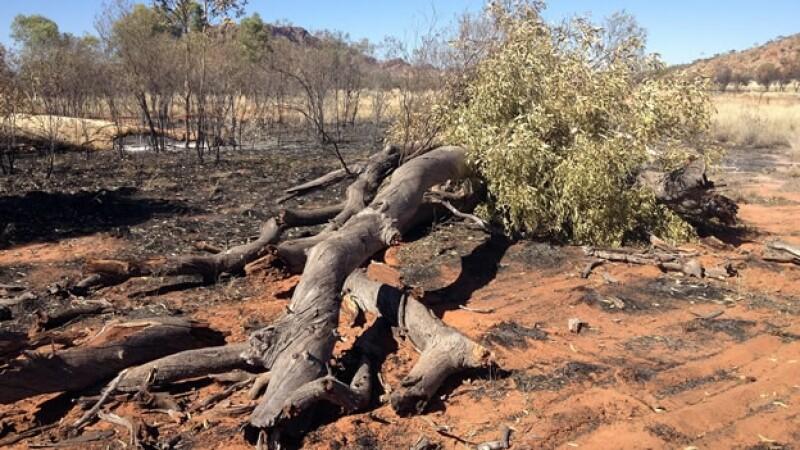 arboles quemados en australia
