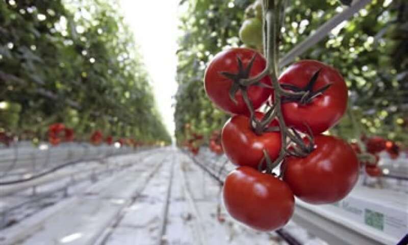 En 2011, los envíos de tomate de México a EU ascendieron a 1,880 mdd. (Foto: ap)