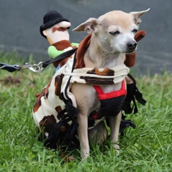 disfraces mascotas 9