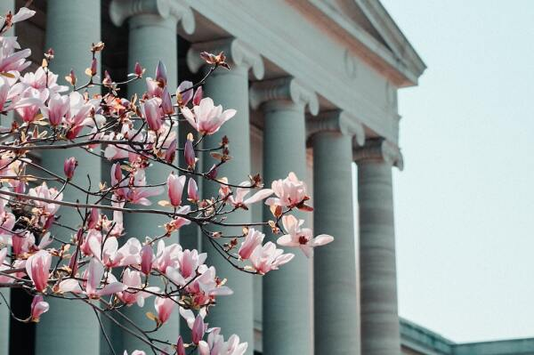 cherry-blossom-washington.jpg