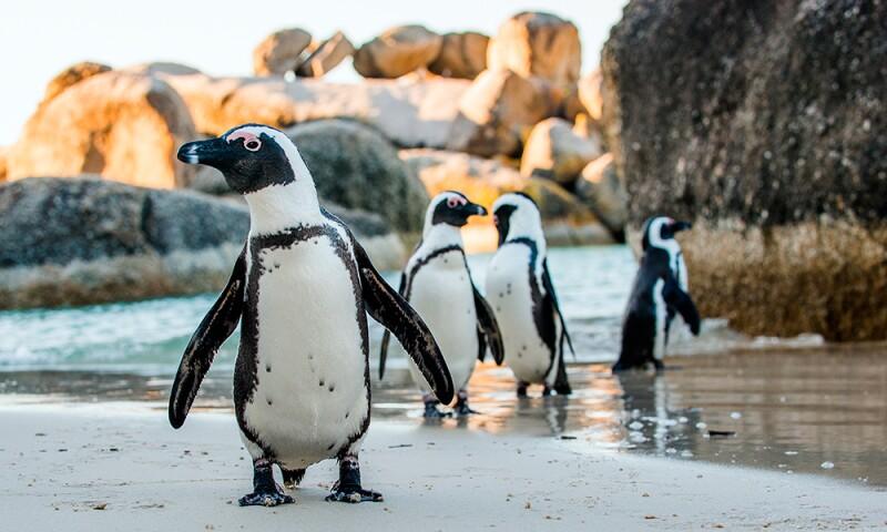#ShareConservation la iniciativa de Original Penguin