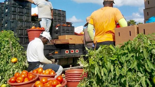 Acuerdo de suspensión tomate mexicano EU