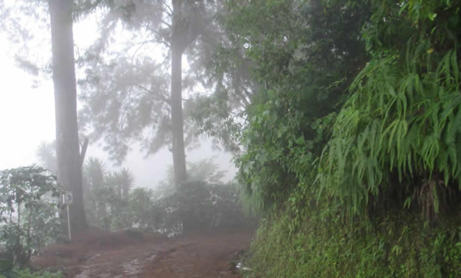 Los caminos destapados son la ruta de aproximación a los cafetales.