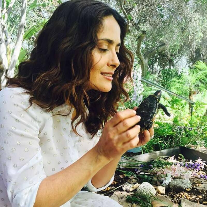 Desde que abrió su cuenta en Instagram, la actriz no ha dejado de publicar lo mucho que cuida a sus mascotas y a los animales que se encuentra diariamente.