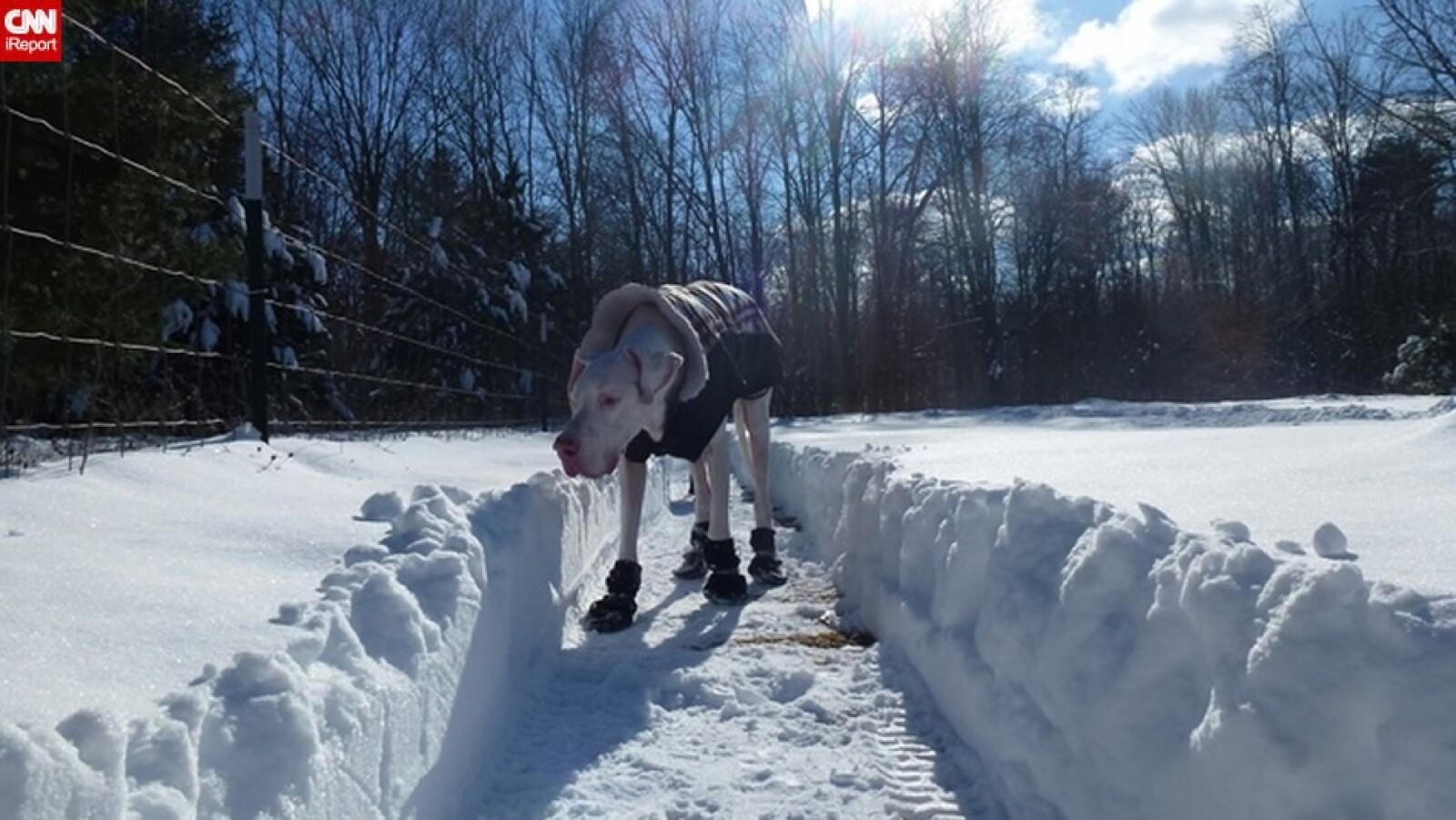 ireport mascotas nieve EU 10