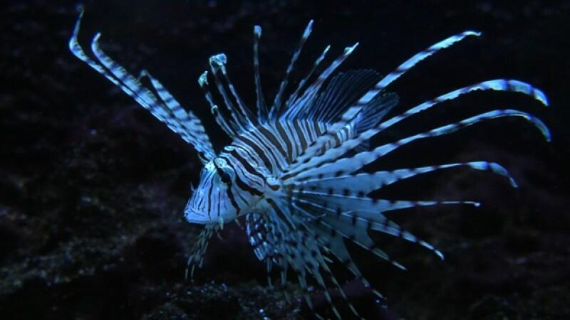 c8b3d02fe54 Las especies exóticas, una amenaza para los ecosistemas