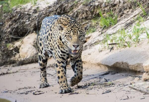 Jofre_Jaguars__28.JPG