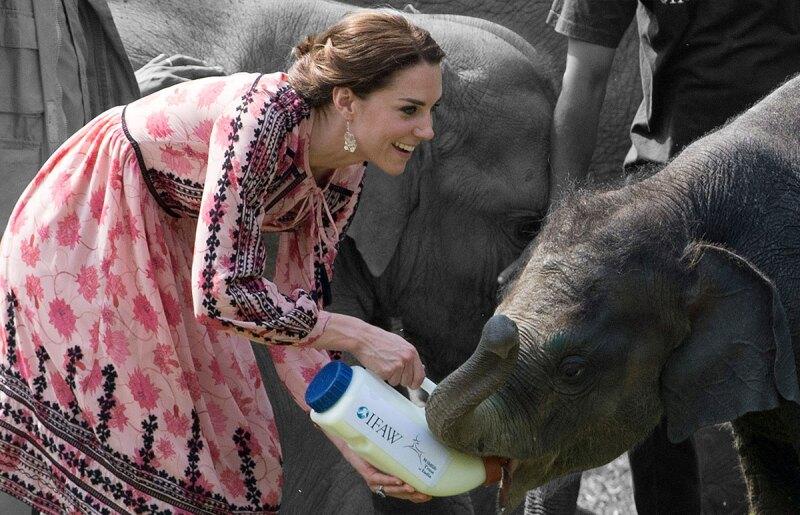 Elefantes-como-Mascota