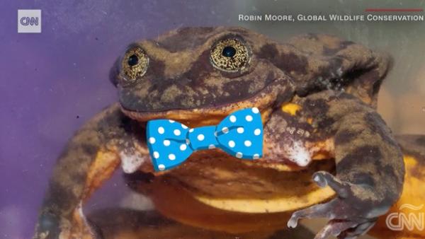 Tras una búsqueda de 10 años, la rana más solitaria del mundo halló pareja