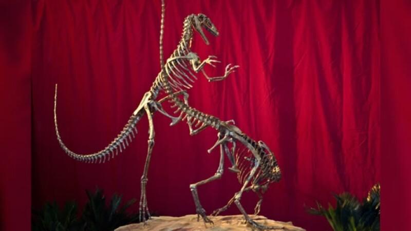 esqueleto de dinosaurio carnivoro