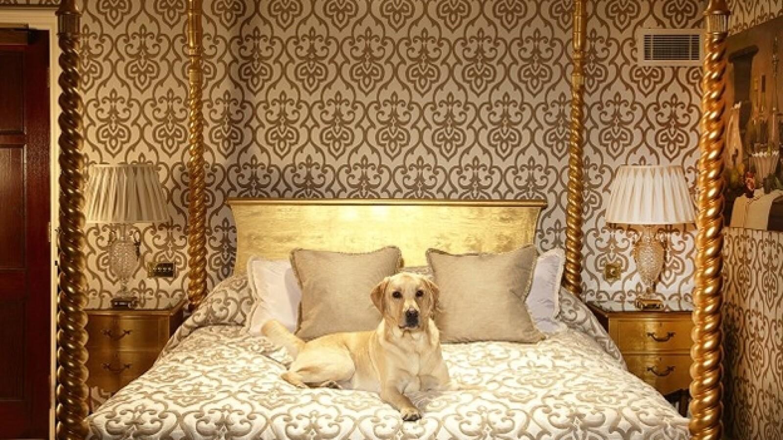 Milestone hotel para perros
