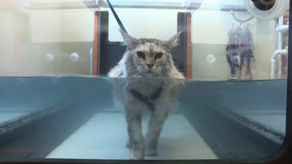 Hidroterapia, láser y acupuntura, algunas formas de la humanización de mascotas