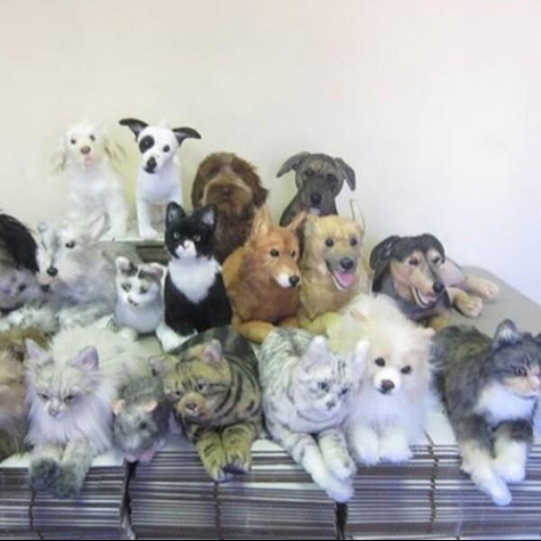 perritos6