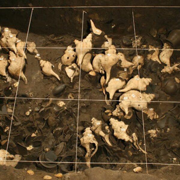 Se recuperaron caracoles de hasta 50 cm. de longitud procedentes del Golfo de México y Mar Caribe.