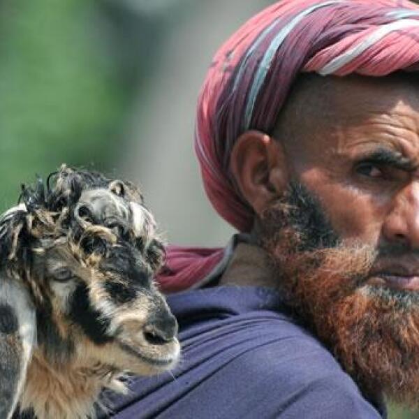 Un nomada de cachemira y su borrego