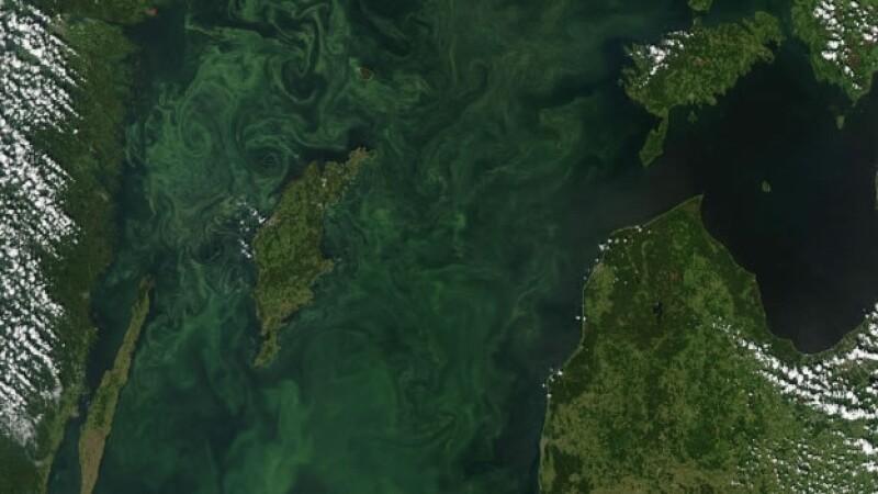 zonas muertas mar báltico