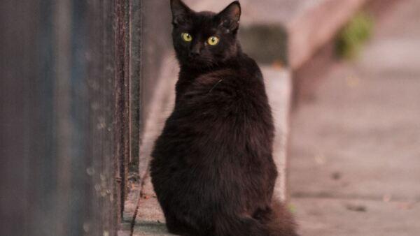 Gato_Negro-1.jpg